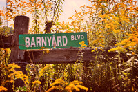 "country, vintage, rustic, street sign, goldenrod, yellow, flowers, rural, ""Christine lewis photography"", fence, barbed wire, décor, fine art print"