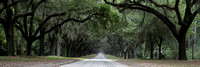 """christine lewis photography"", ""fine art"", georgia, ""isle of hope"", ""live oak"", ""oak avenue"", panorama, savannah, ""spanish moss"", ""wormsloe plantation"""
