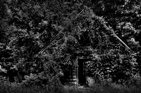 "B&W, abandoned, ""black and white"", cabin, home, house, overgrown, rustic, ""tellico plains"", tennessee, vines"