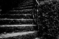"B&W, Georgia, Savannah, ""black and white"", historic, ivy, monochrome, overgrown, stairs"
