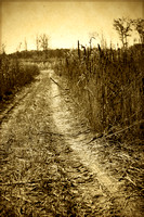 "corn, country, farm, ""leading lines"", sepia, vintage"