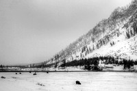 HDR, National, Park, WY, Wyoming, Yellowstone, activity, and, art, bison, black, decor, fine, home, landscape, landscape, monochrome, mountain, photographs, pictures, prints, professional, snow, volca