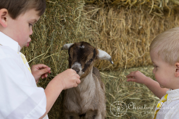 "professional childrens photography chattanooga tn ""christine lewis photography"" country baby goat kid"