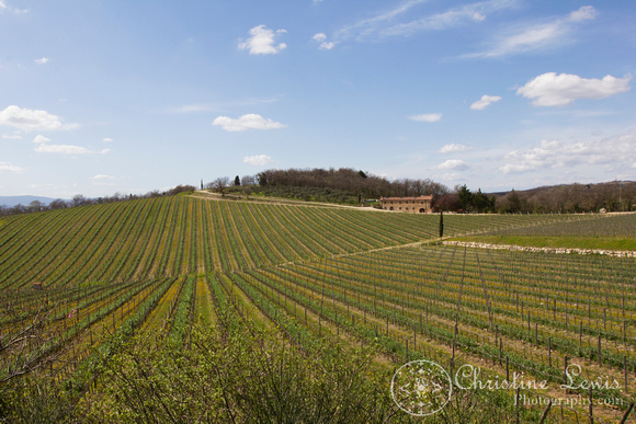 "chianti, tuscany, italy, travel, ""christine lewis photography"", fine art print, home decor, vineyard"