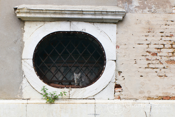 "italy, venice, travel, ""christine lewis photography,"" home decor, fine art print, cat"