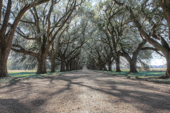 HDR, Louisiana, NOLA, New, Orleans, allee, alley, live, moss, oaks, point, spanish, trees, vanishing