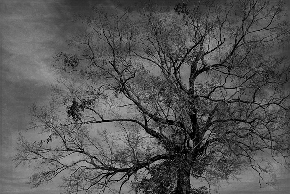 "b&w, birdhouse, ""black and white"", dark, eerie, fall, monochrome, moody, textured, tree, vintage"