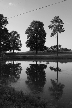 B&W, birds, countryside, monochrome, pond, reflection, rural, trees