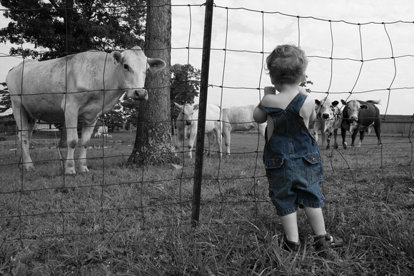 farmer in training, overalls, fine art print, child, boy, selective coloring, cattle, fence
