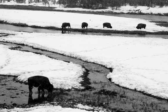 National, Park, WY, Wyoming, Yellowstone, activity, and, art, bison, black, decor, fine, home, monochrome, photographs, pictures, prints, professional, snow, stream, volcanic, white, winter