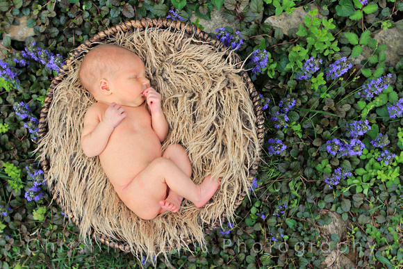 "newborn professional portrait, chattanooga, tn, tennessee, ""christine lewis photography"", purple flowers"