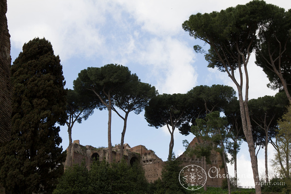 "rome, italy, colosseum, ""christine lewis photography"", travel, ancient, umbrella pine"