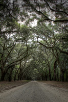 "HDR, ""christine lewis photography"", ""fine art"", georgia, grove, ""isle of hope"", ""leading lines"", ""live oak"", ""oak avenue"", path, road, savannah, ""spanish moss"", trees, ""wormsloe plantation"""
